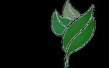 CHH Leaf Logo